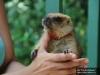Детский контактный зоопарк «Лукоморье» в Казанском зооботсаду пополнился новыми обитателями – 4 сурками