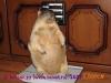 Сурок Олеся 1 год 3 месяца