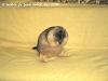 Сурки Тимка и Фимка 16 месяцев