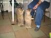 Сурки Тимка и Фимка 18 месяцев