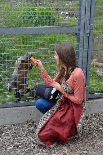 Мармоты - зверьки сообразительные, ведут себя с туристами по-разному