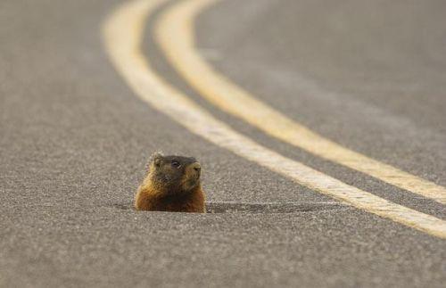 Фотофакт: и на американской трассе есть дыры