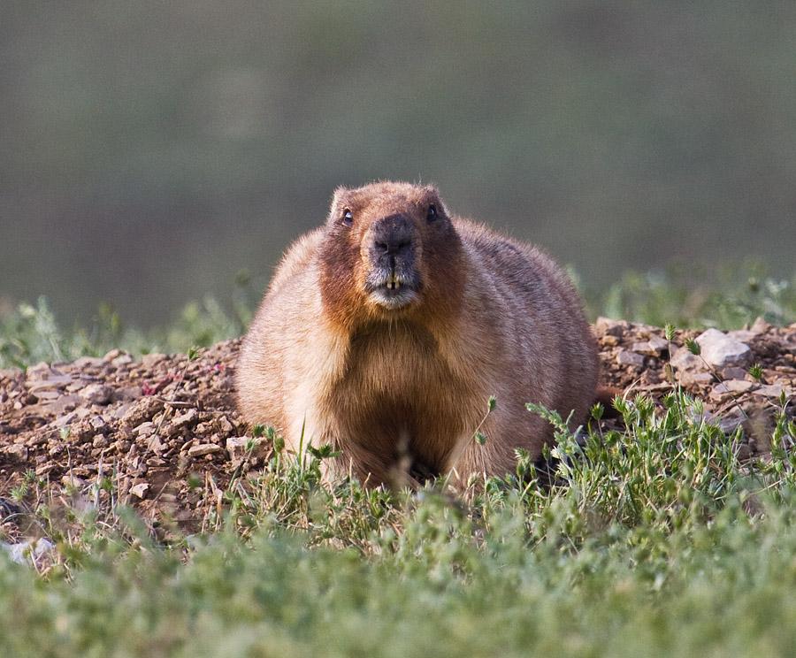 Вот такого зверя снял 20 мая в ущелье Килькан в Оренбургской области натуралист makslat