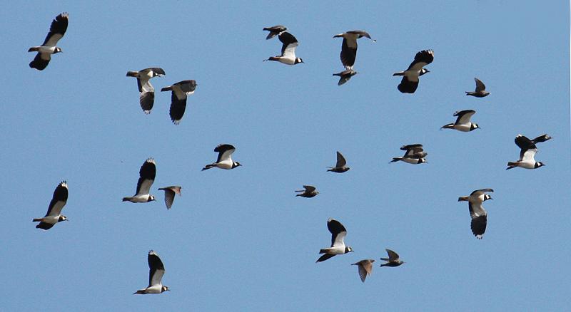 Кроме сурков здесь множество птиц