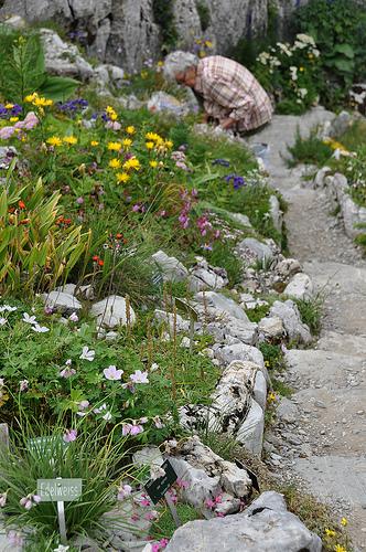 La Rambertia, альпийский садик, где садовники выращивают много видов растений и цветов