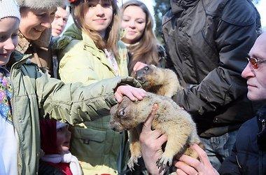 Львовские сурки обещают весну лишь в середине марта