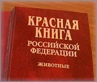 В Кемеровской области запрещена охота на сурка