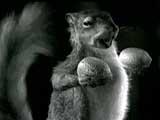 Сурки и другие грызуны в рекламе 27